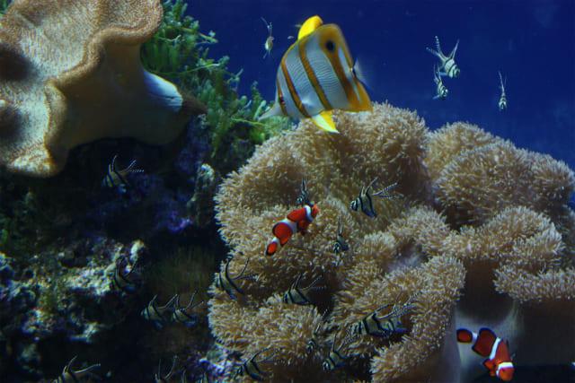 名古屋港水族館に子連れで行くならベビーカーと授乳室に注意!イルカショーにおおはしゃぎ!