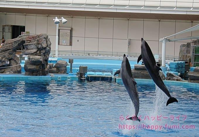 名古屋港水族館イルカショー